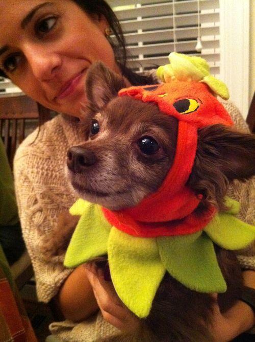 Halloween_kinson